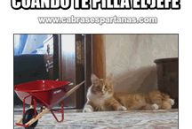 videos de gatos