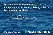 #TacklingBycatch / Bycatch—animals that fishermen don't want, cannot sell, or are not allowed to keep—comes in many different forms and affects people in different ways. We asked a few of these people for their perspectives on bycatch.