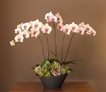 Lovely White & Pink Orchids
