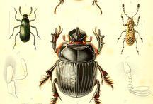 Invertébré / Insecte en tout genre