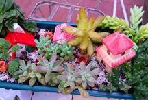 MIS CREACIONES. / Estos son mis pequeños jardines. Creaciones mías.