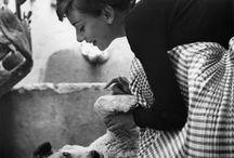 Audrey & Animals