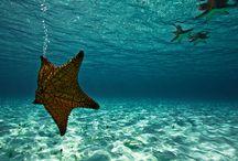 Sea Sea Sea / by Yachtico Charter