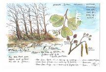 magie van bomen en planten