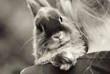 Bunnies / by Bethany