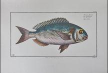 рыбы и другие литографии и гравюры