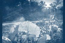 Cyanotype photoprints by Pirjo Lempeä / My own cyanotypeprints.