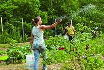 Biodynaaminen viljely