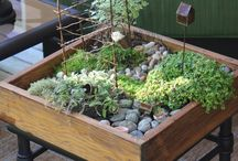 indoor planting and gardens