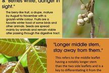 Goodbye Bad Plants