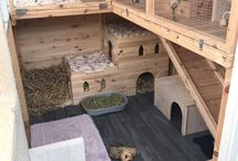 Rabbit enclosure