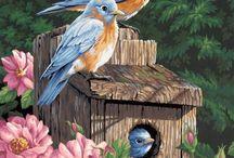 Разное / Рисунки птиц.