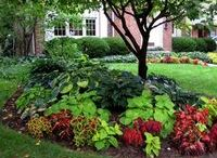 Landscape Designs and Plans / Great combinations for sun and shade