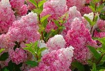 Gardening shrubs n trees