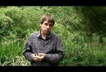 Permakulttuuri: Metsäpuutarha