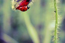 Ladybugs / by Vanessa Schwartz