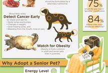 Senior Pet Wellness