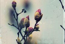 f ℓ σ я α / botanical - flowers, plants, trees, fruit