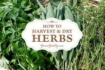Herb drying