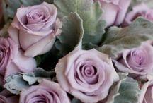 rózsák  kert