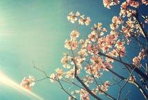 {Flowers} / by Carolina Perez Molina