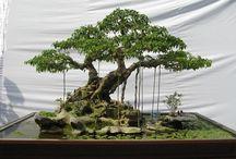 Bonsai Prospek