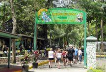 Jamaica falmout