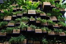 #gardening | Gardening / #gardening #verticalgardening #plant #succulent #balcony