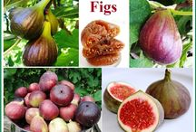 FOOD: FIGS~BIBLICAL SUPER FOOD / by Terlyn Strong Dufrene
