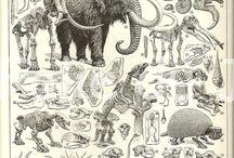 Monsius Forhistoriske dyr
