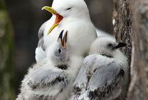 birdiees