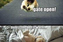 Animal pics and sayings