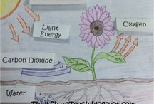 Science: Photosynthesis & Cellular Respiration / Geared towards a middle school classroom (6-8), this board contains ideas for teaching photosynthesis and cellular respiration.