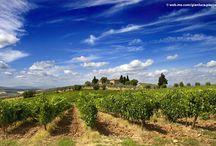 Tuscany / Best pics of Tuscany / by Gianni Bianchi