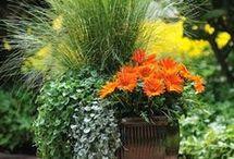 zahrada kvety