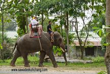 Elephants / Asian elephants from Koh Chang, Thailand
