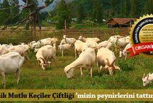 Gökçeada Organik Mutlu Keçiler Çiftliği