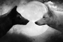 tekeningen / wolven,honden