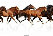 Horse posters / horse posters, horse prints, horse t-shirts, horse mousepads