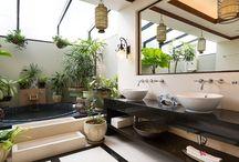 houseplants & designs