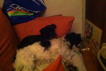 Mis perras / Que haria yo sin ellas