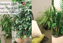 Indoor plants / Nothing can make a #indoor #green living space more ALIVE than plants.... breath life into indoor spaces