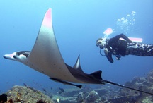Komodo Diving / Komodo Diving offer daily scuba dive trips and live-aboard safaris into the Komodo National Park.