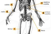 Anatomía huesos