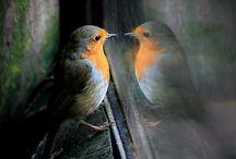 Vogels  in Nederland .