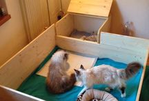 kittens / by Frankie D Luxe
