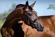 Animal. Horses and horse breeding / Horses and horse breeding