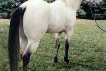 Horses / Horse