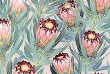 Proteas & fymbos