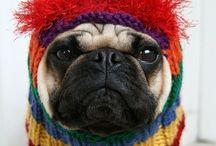 Pugs...I ❤️ pugs